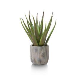 Dekoracija, Aloe