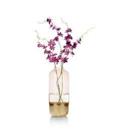 Ukrasna vaza, Lucida